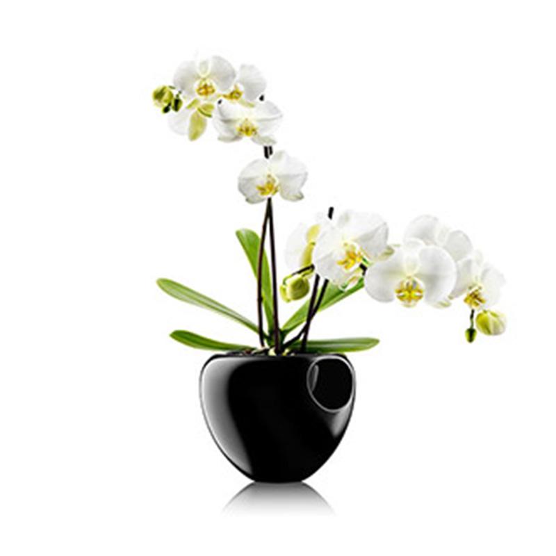 ������ ��� ������� orchid pot ������ Fine Design���� � �����<br>. ����� - Fine Design. �������� - ��������� ��������, �������, ������.<br><br>���������� �������������: Fine Design<br>��������: ��������� ��������, �������, ������